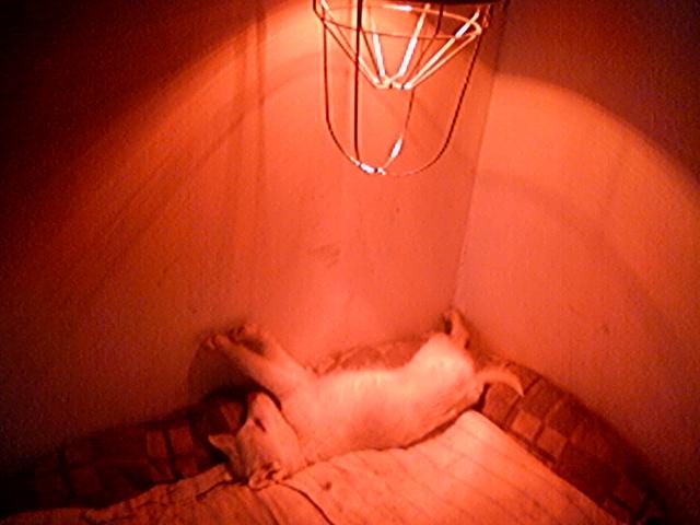 renovierungsarbeiten dezember 2005 freundeskreis brunopet tierschutz in rum nien. Black Bedroom Furniture Sets. Home Design Ideas