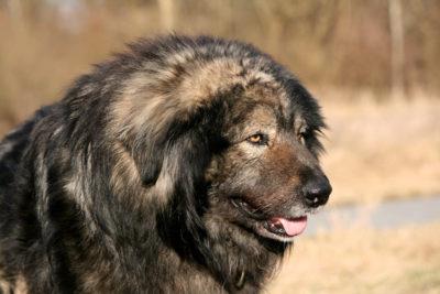 Der Rumanische Hund Freundeskreis Brunopet Tierschutz In Rumanien