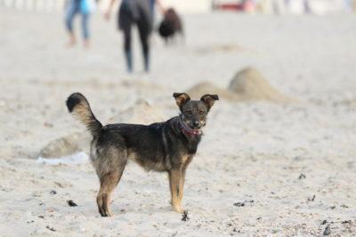 mittelgroße hunderassen familienhund