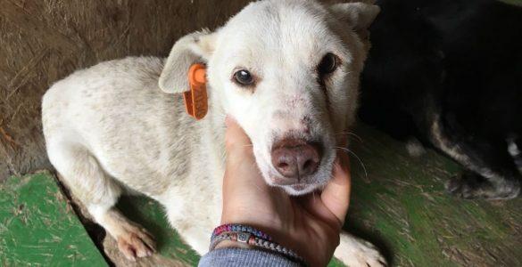 Hilfe für Hunde aus Slatina