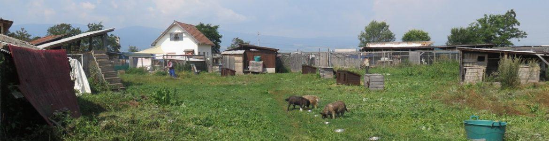 Ein Rundgang durch unser Tierheim