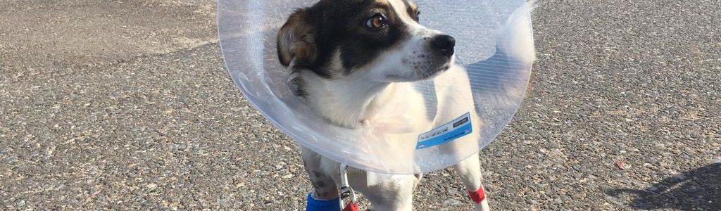 Ein kleiner Hund mit großen Baustellen: Sakina braucht Ihre Unterstützung!