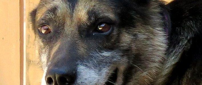 Athos – Rüde