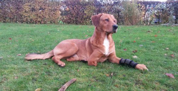 Spendenaufruf für Tjalfs Prothese  Update