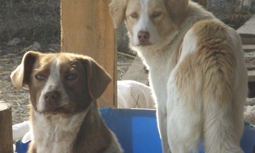 Stress, Stress, Stress – unsere Hunde brauchen Hilfe!