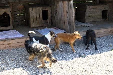 Bericht über einen Kastrationseinsatz in Rumänien von Tierärztin Nina Schöllhorn