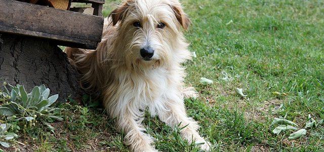 Liebe Tierfreunde, wir benötigen dringend Eure Hilfe für unseren lieben Teddy!