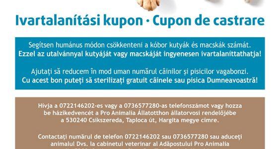 Rumäniens schmutziges Geschäft mit dem Hundemord – Kastrationsaktion