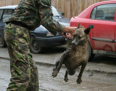 Grausamer Hundemord in Brasov
