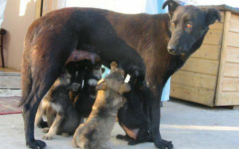 Gesetzesentwurf über den Umgang mit Straßenhunden in Rumänien